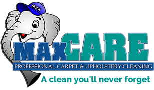 Tampa Florida Carpet Cleaners